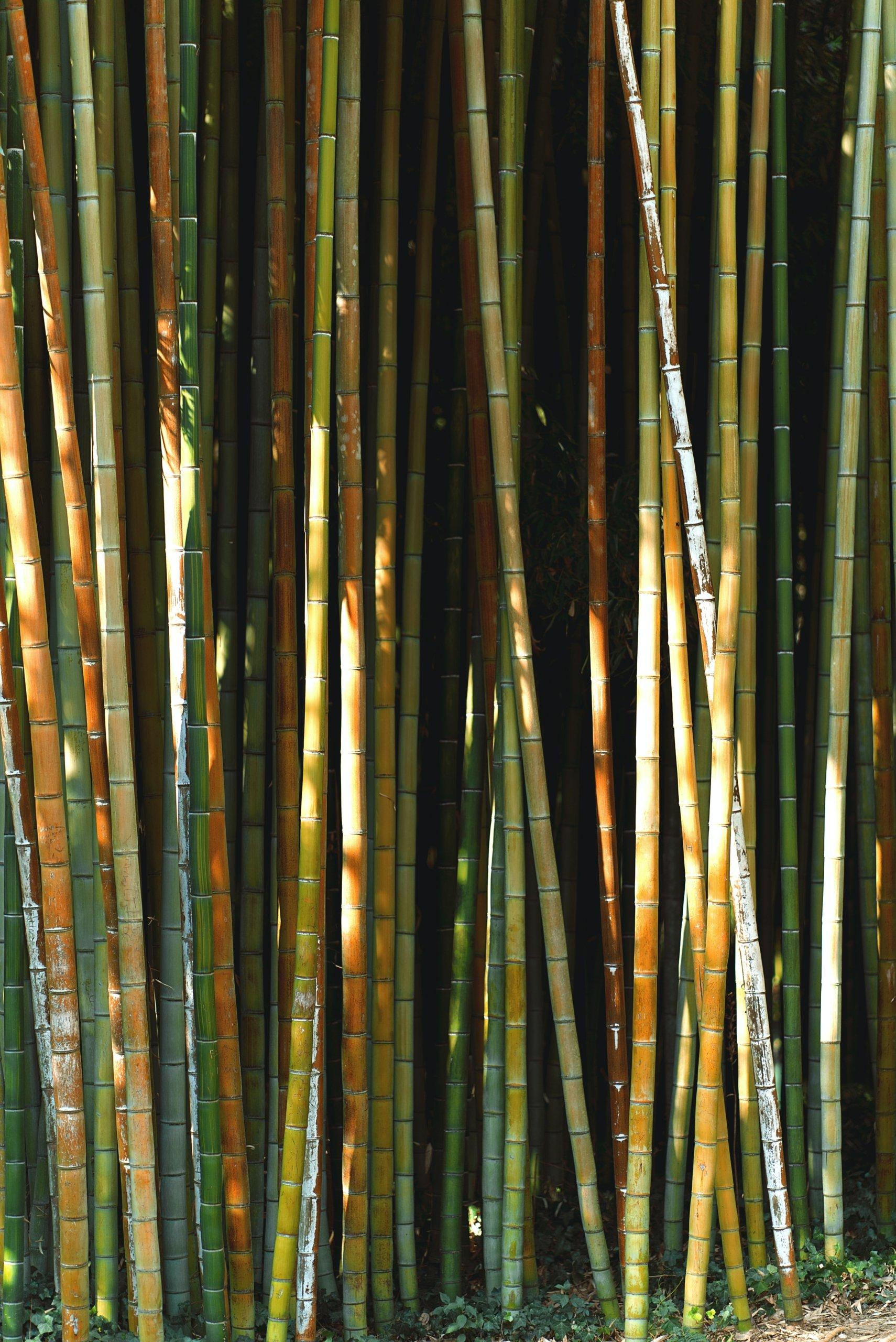 matiere-paille-en-bambou-naturel